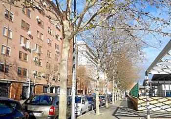 Árboles podados fuera de fecha, según los ecologistas, en la calle Campamento. / El Correo