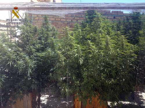 marihuana-las-cabezas