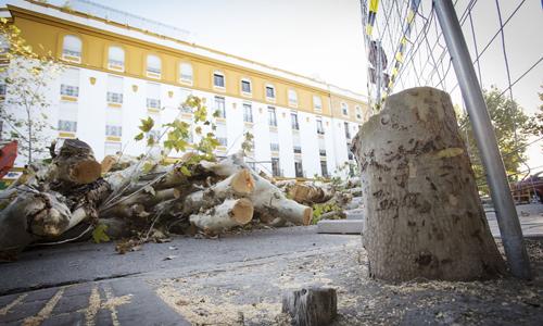 Sevilla 28/08/2014 Arboles talados en Almirante LoboFOTO: Pepo Herrera