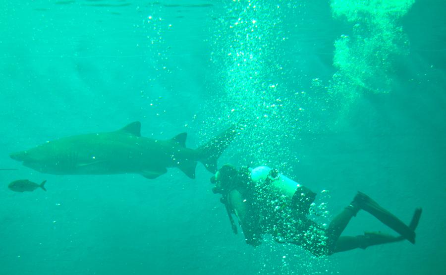 El acuario de sevilla abre sus puertas - Entradas acuario sevilla ...