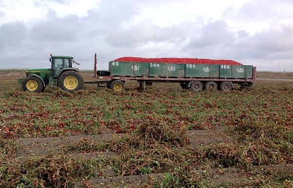 Camión cargado de tomates. / E.P.