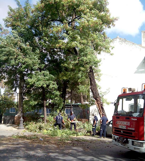 Bomberos proceden a trocear el árbol. / Foto: I. Campanario