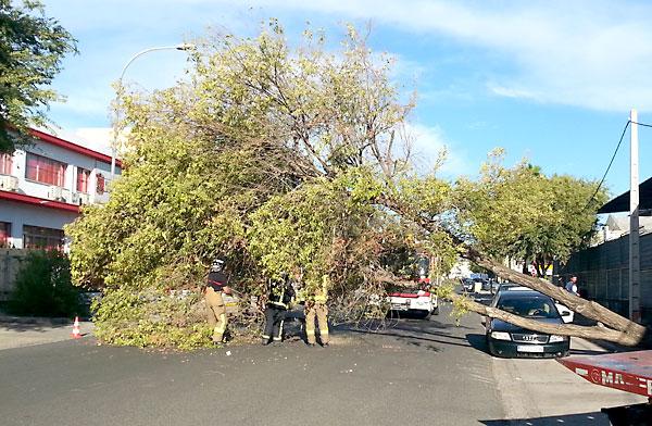 Imagen del árbol caído en la Avenida de la Industria. / A. Delgado-Roig