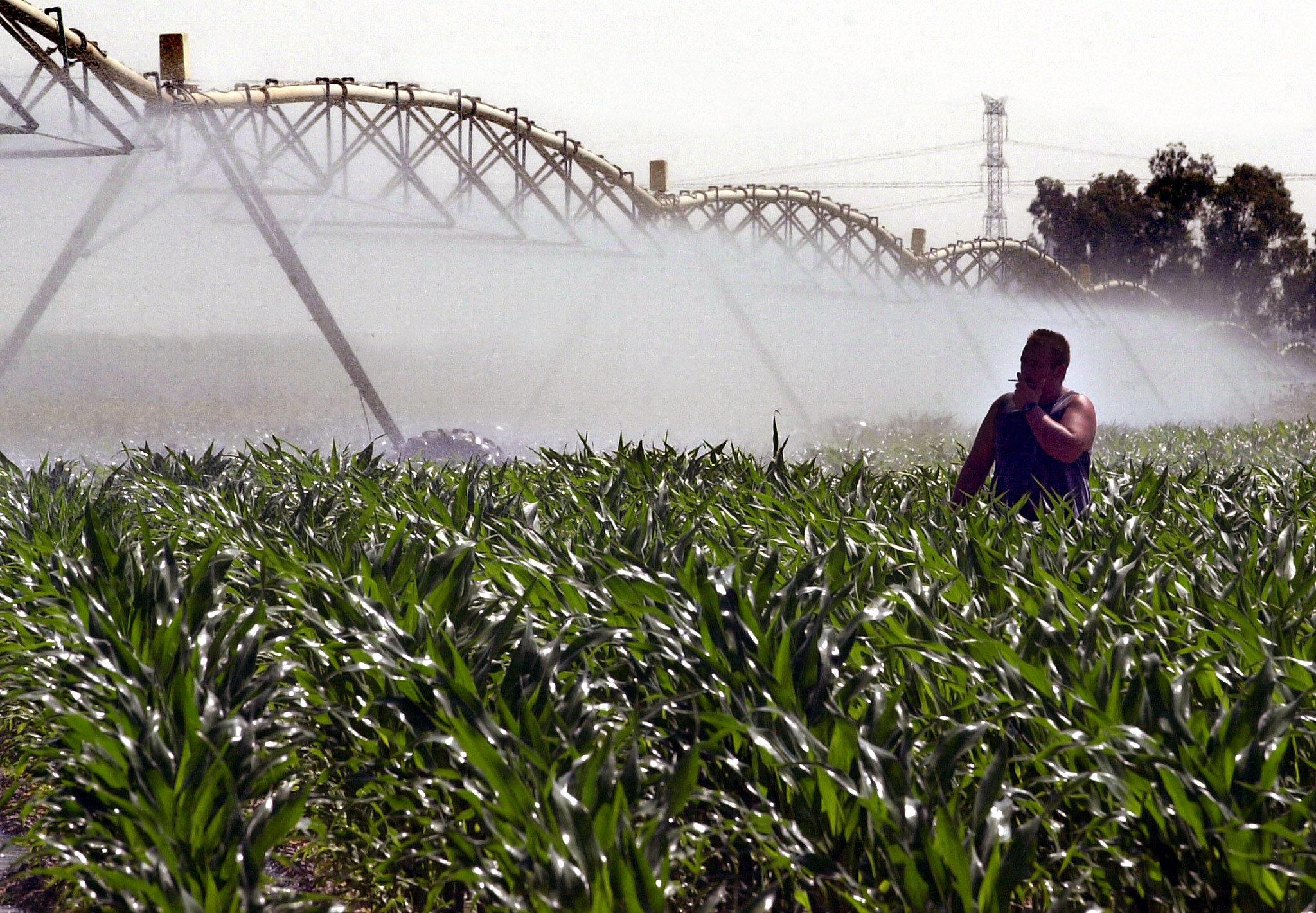 Un operario controla un sistema de riego en una finca sembrada de maíz. / EMILIO MORENATTI (EFE)