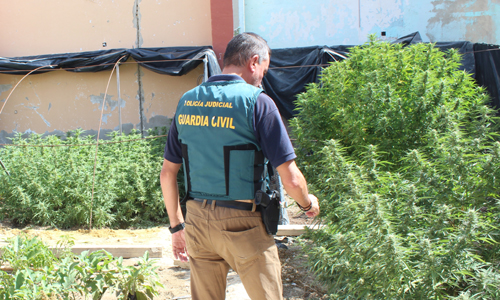 marihuana detenidos