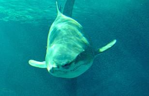 tiburon-acuario
