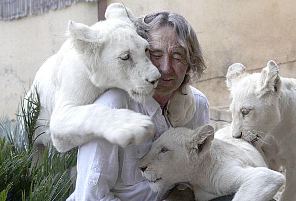 Ejemplares de tigres blancos. / Mundopark