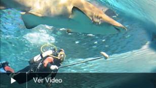 ACUARIO-COMIDA-video