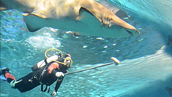 Un acuarista alimenta a un tiburón en el Acuario de Sevilla / El Correo
