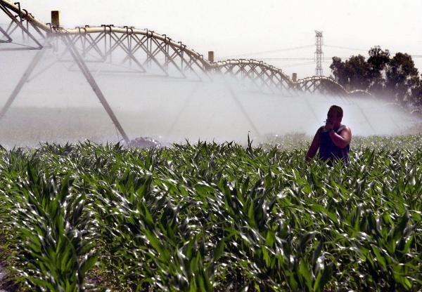 Un trabajador controla el sistema de riego en una plantación de maíz de una finca sevillana. / EMILIO MORENATTI (EFE)