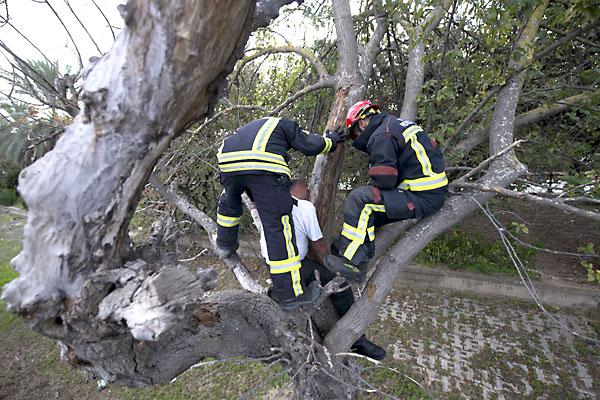 Rescate de una persona en un árbol durante el simulacro. / Foto: J.M.Paisano