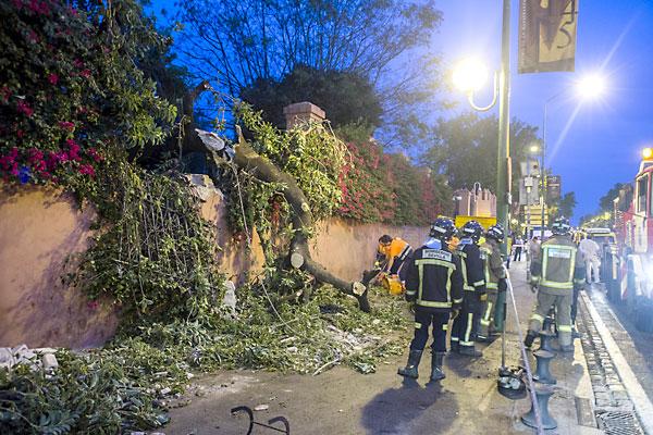 Las ramas del árbol y los trozos de la pared cayeron al Paseo de las Delicias sin causar daños personales. / Carlos Hernández