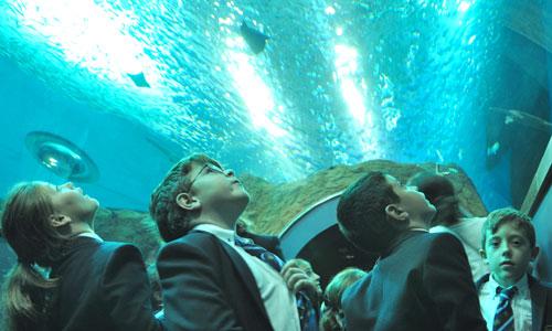 colegio-acuario