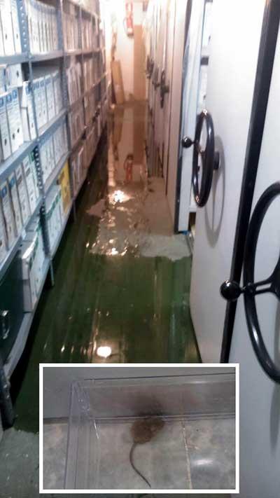 Fotos de los archivos de Viapol inundados y de uno de los ratones hallados.