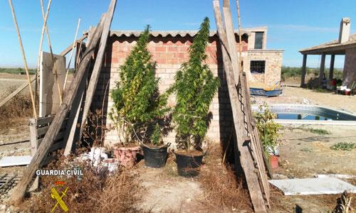 marihuana-olivares