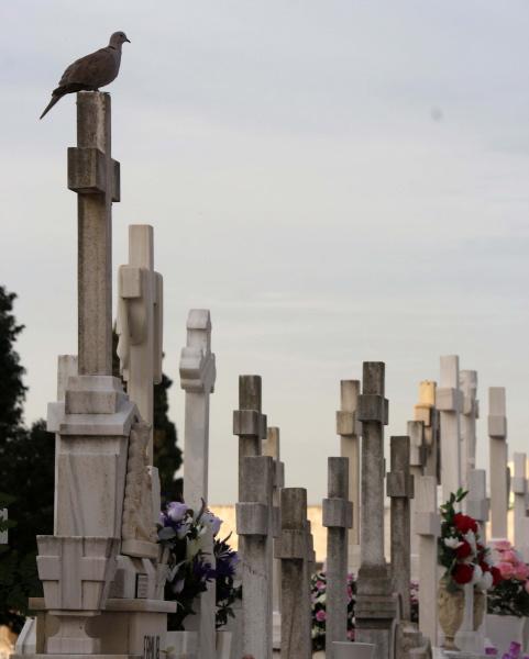 Una paloma otea el horizonte desde lo alto de una sepultura. / José Luis Montero