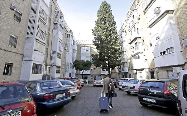 Ciprés de la calle Solearilla que piden retirar los vecinos por las dimensiones que tiene. / Fotos: José Luis Montero