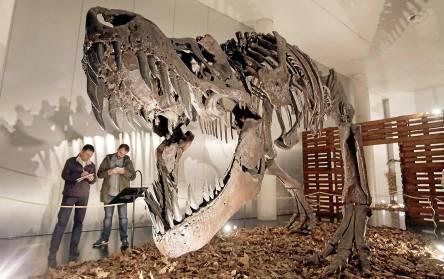 Las grandes osamentas de los dinosaurios son las estrellas de la exposición. / José Luis Montero