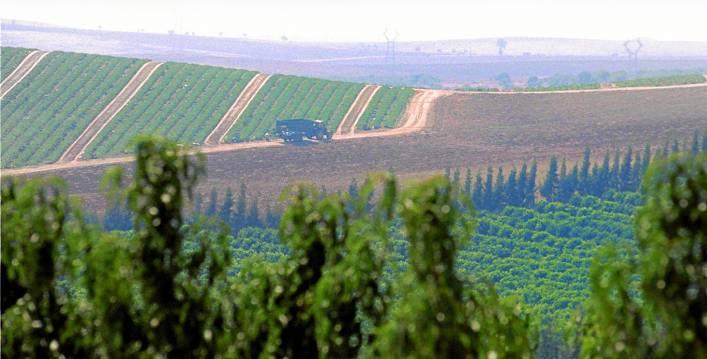 Imagen de campos de cultivo de frutales y tierras aradas y listas para sembrar en la provincia de Sevilla. / SERGIO CARO