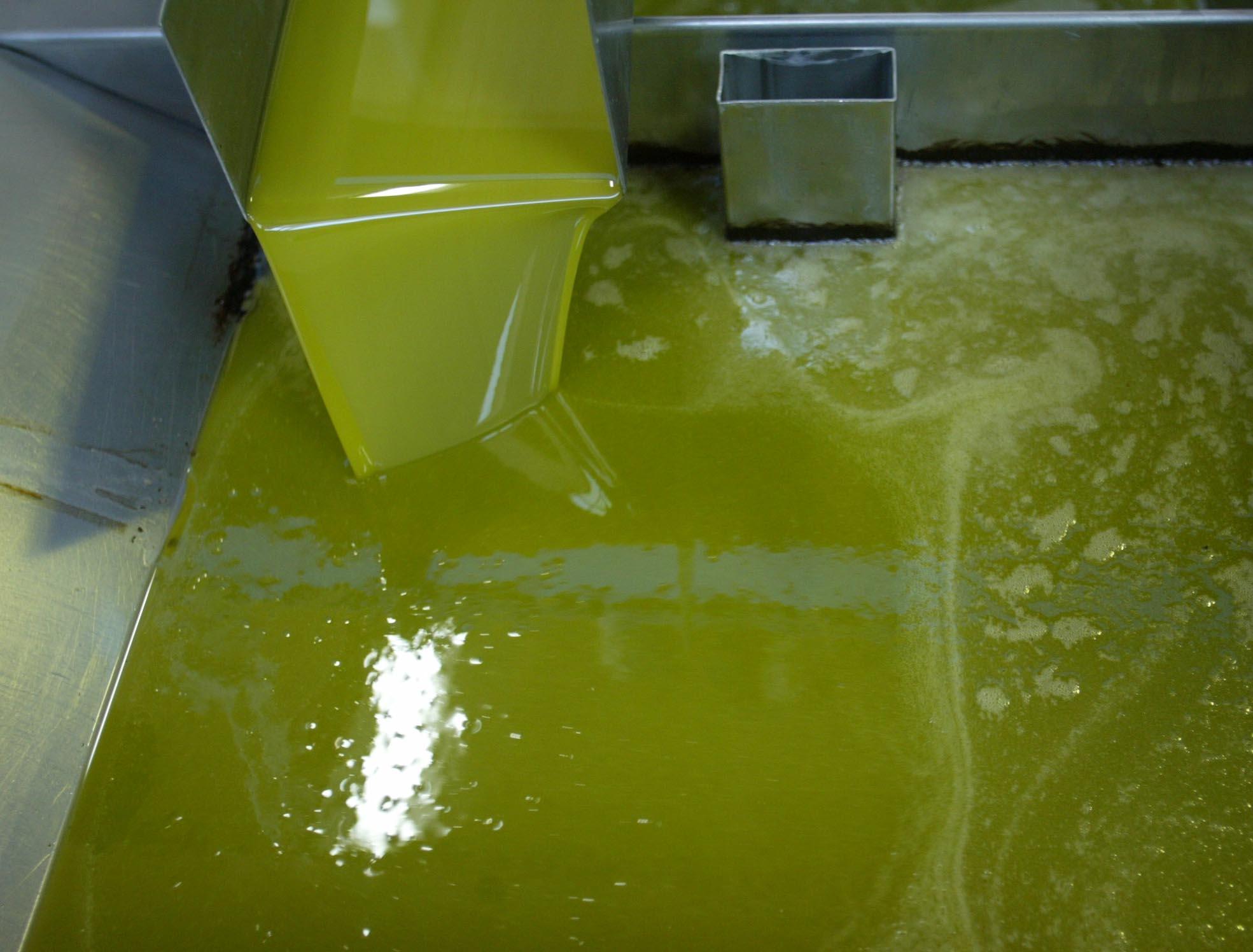 Aceite de oliva virgen extra en las instalaciones de un grupo de cooperativas sevillanas. / JAVIER DÍAZ