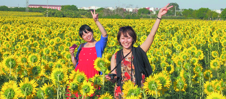 Imagen Imagen japonesas y agirasoles