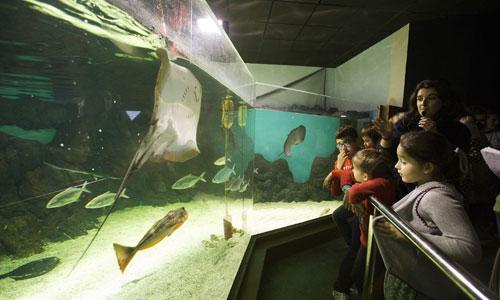 acuario-noche