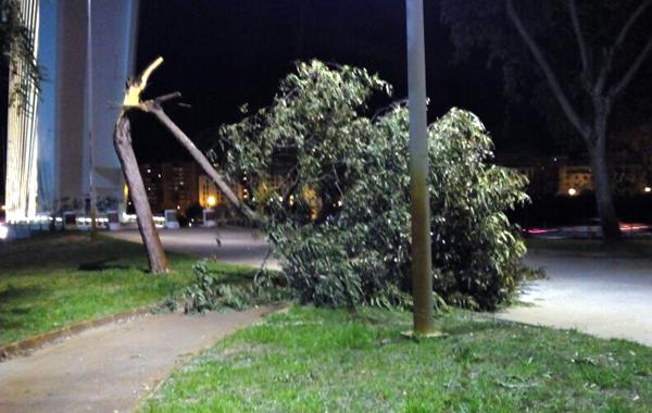 Un árbol caído en el Parque del Alamillo.