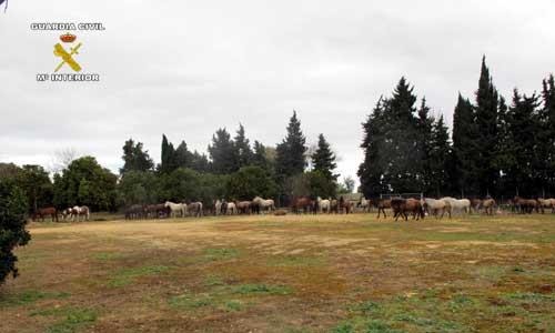 caballos-seprona-02