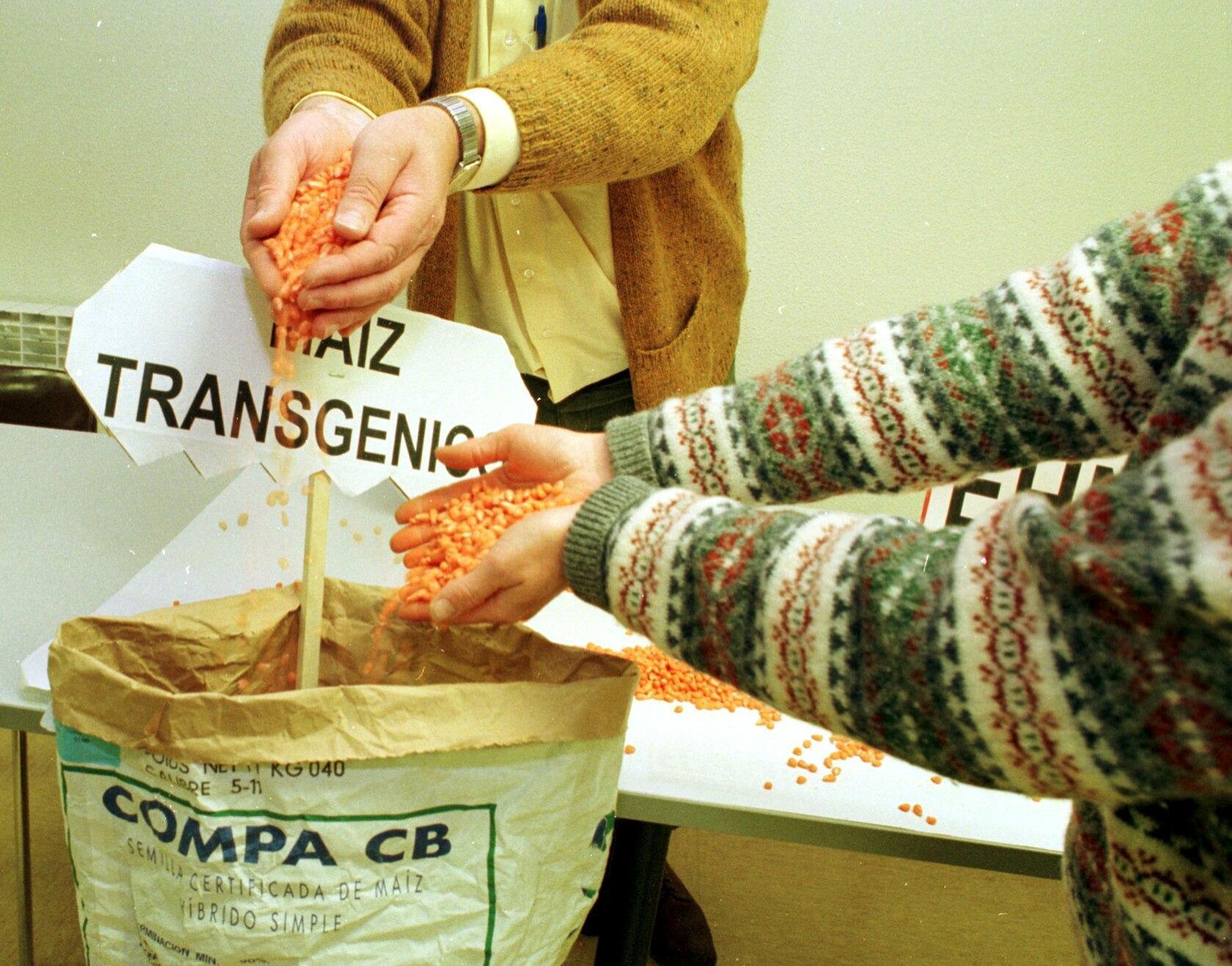 Unos agricultores muestran semillas de maíces transgénicos comercializados en España. / DAVID AGUILAR (EFE)