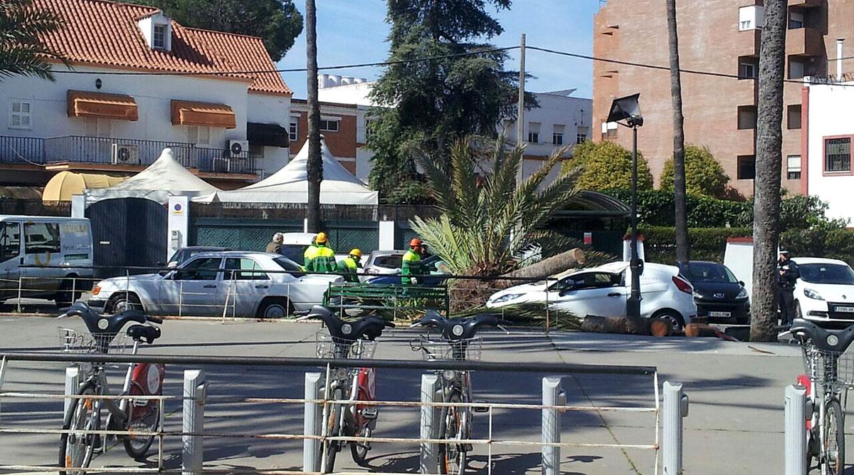 Una palmera cae sobre dos coches en la Plaza de Antonio Aparicio Herrero.