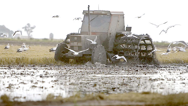 El sector arrocero se muestra preocupado por los efectos del dragado. / EFE